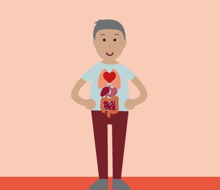 Az egészséges öregedés kulcsa: bélbarát táplálkozás